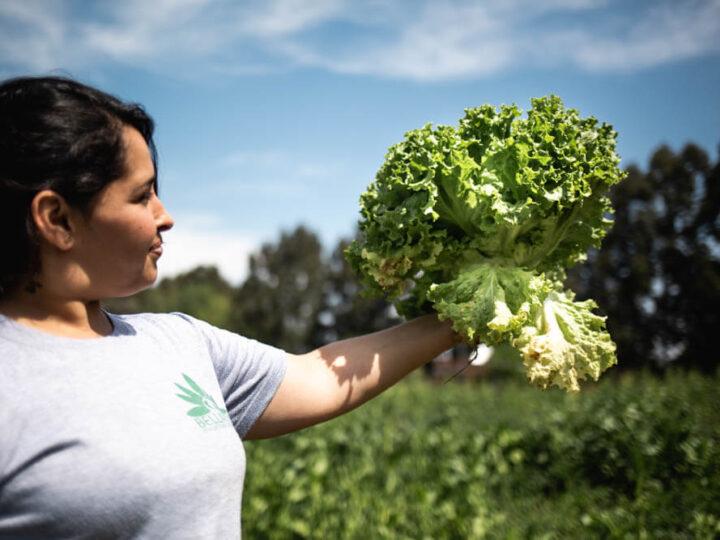 La Ley que impulsa la inédita Dirección Nacional de Agroecología